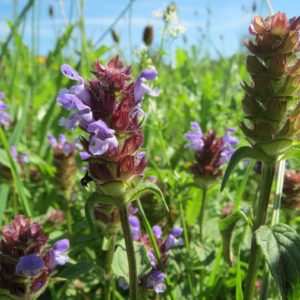 self-heal-from-pixabay